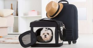 5 Tips para viajar con tu mascota
